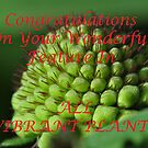 Banner for All Vibrant Plants Challenge by MissyD