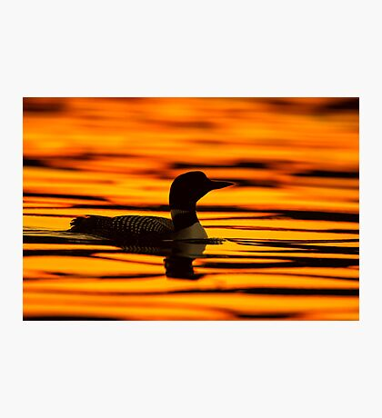 Loon at Sunrise Photographic Print