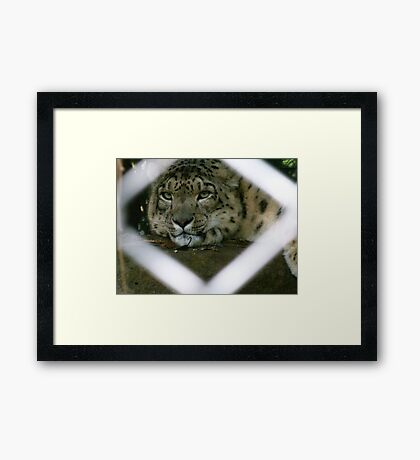 Keeping My Eye On You Framed Print