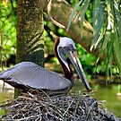 Pelican Perch by Kerry Loggins