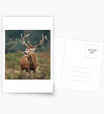 Bellowing Red Stag Postcards
