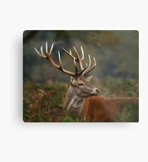 Majestic Red Deer Metal Print