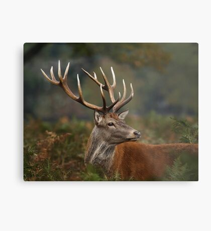 Majestic Red Deer Metal Print