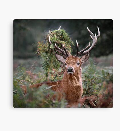 Red Deer Antler Adornment Canvas Print