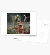 Red Deer Antler Adornment Postcards