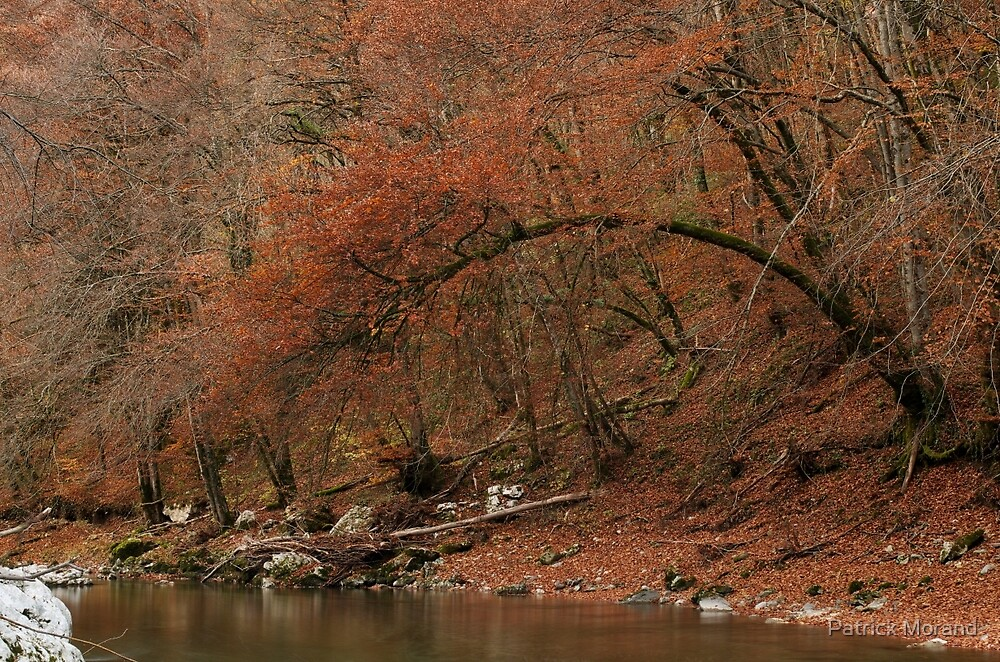 Red autumn along the river by Patrick Morand