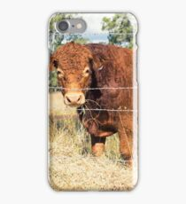 Outback Cow iPhone Case/Skin