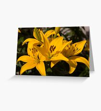Lilies of Lowell Greeting Card