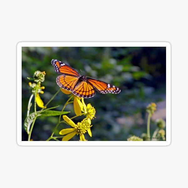 Viceroy Butterfly on Tickseed Sticker