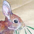 Little Brown Bunny by Alexandra Felgate