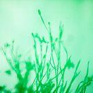 Green with Envy? by Alexzander Carnel