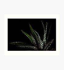 Haworthia Aloe Vera cactus succulent plant white spots Art Print