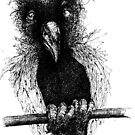 bird by Daniel Mathers