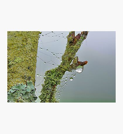 Moss and Dew Drops Photographic Print