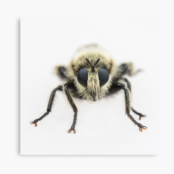 Bee - Face to Face Canvas Print
