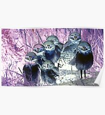 Wild nature - owls Poster