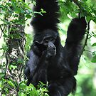 Hanging Around Gibbon Style by ApeArt