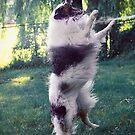 Dog versus garden hose by olivera kenic