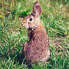 Bunny by EkaterinaLa