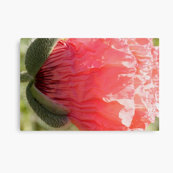 vomiting love Canvas Print