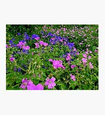 Soft Colours Photographic Print