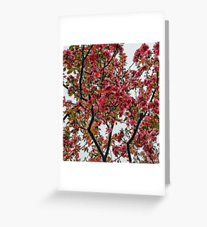 Apple Blossoms - Cloudy Day Greeting Card