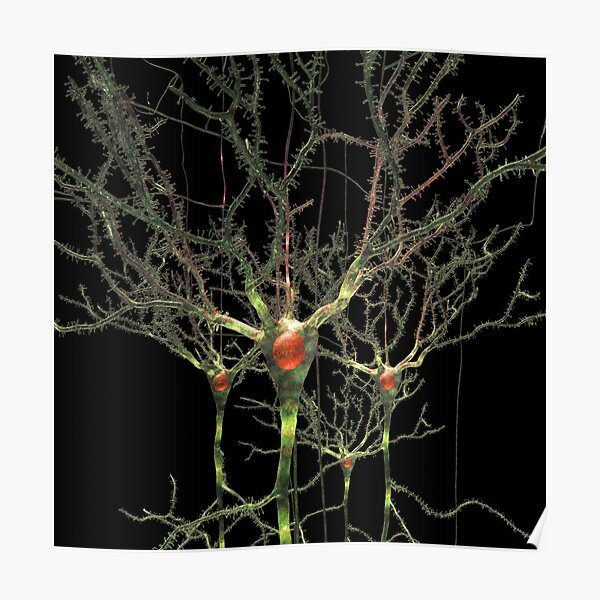 Neurons or Brain Cells Poster