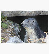 Marmott Chamonix Poster