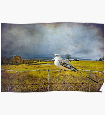 Scissor Tail Flycatcher in the Countryside Poster