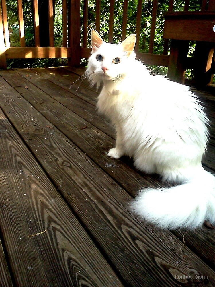 pinky my white fluffy cat on deck in sun by Tia Knight