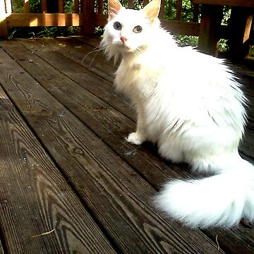 pinky my white fluffy cat on deck in sun by tiaknight