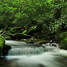 Roaring Forks by dc witmer