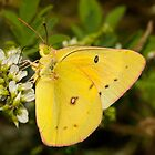 Macro Sulphur by Thomas Young