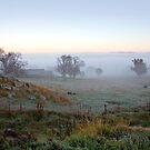 Frosty Farm by David Haworth