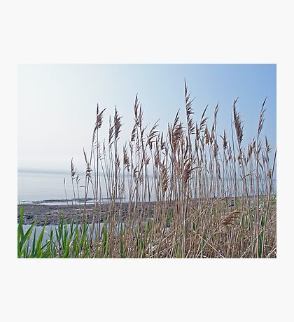 Island Beach State Park - New Jersey - Bay Side Photographic Print