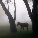 Forest Foal by David Haworth