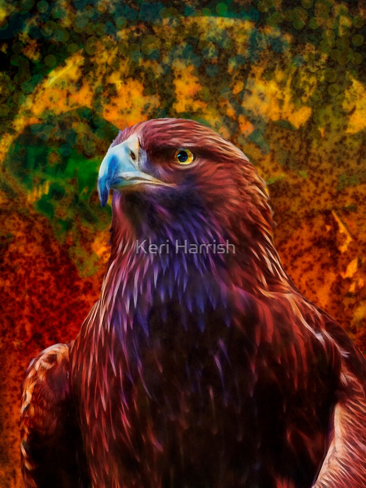 Golden Eagle by Keri Harrish