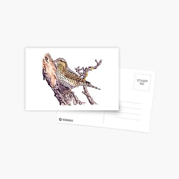 Eurasian wryneck Postcard