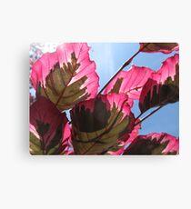 Macro Leaves Canvas Print