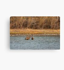 Knee deep in trouble! Canvas Print