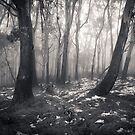 Mt Donna Buang by Andrew Bradsworth