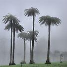 Ancient Tree Ferns - Mt Wilson NSW Australia by Bev Woodman