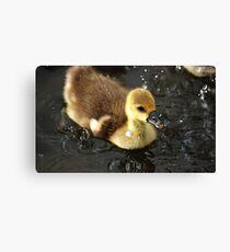 Ducky splashing Canvas Print