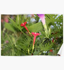 Cypress Flower Poster