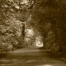 Country Lane by Andrew Smith