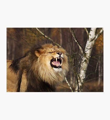 I'm the King! Photographic Print