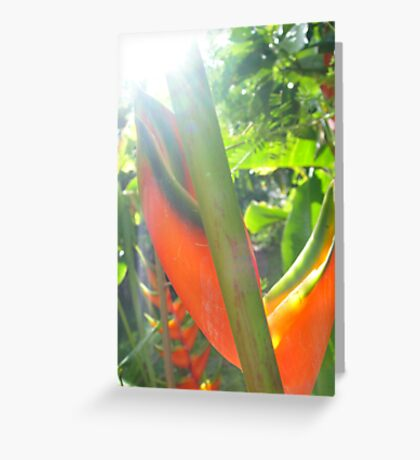 Catching rays  Greeting Card