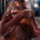 Orangutan by Niamh Harmon