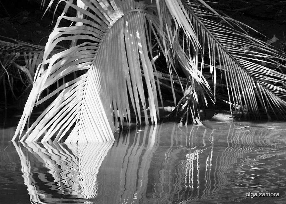 Frond Reflections by olga zamora