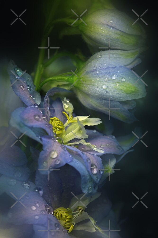 The blue Delphinium by EbyArts